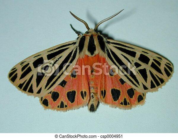 Orange moth - csp0004951