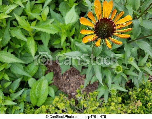 orange, pétales, fleur - csp47911476