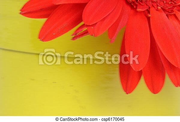 orange, pétales, résumé - csp6170045