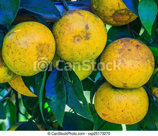 Orange - csp25173270