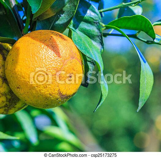 Orange - csp25173275