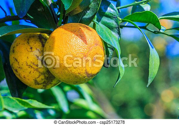 Orange - csp25173278