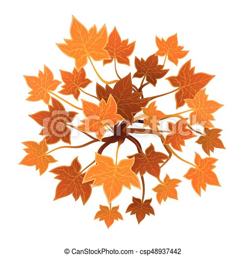 Orange plant or tree, top view  Vector illustration, isolated on white