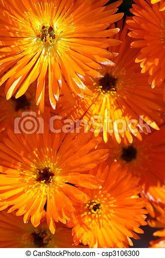 orange, plante, fleurs, glace - csp3106300