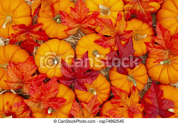 Orange pumpkins with fall leaves on straw hay background - csp74862545