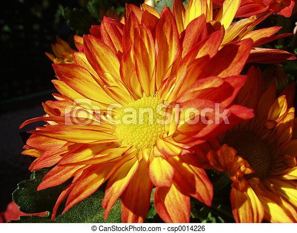 Orange - csp0014226