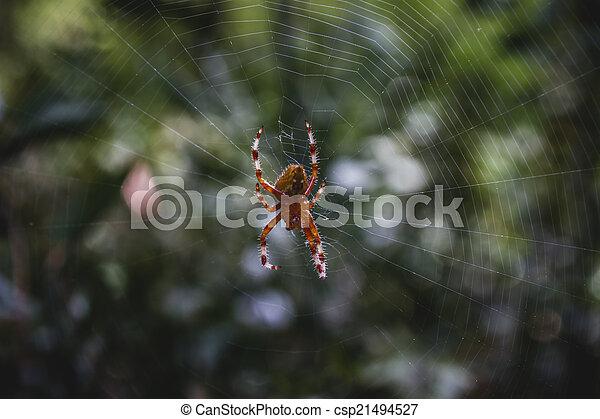 orange, toile, centre, araignés - csp21494527