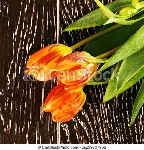 Orange Tulip Flowers - csp39727965