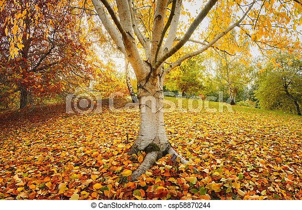 Orange View - csp58870244