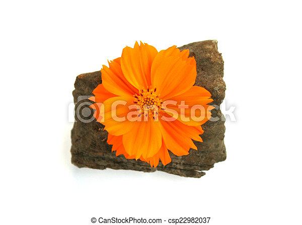 Orange, weiße blume, freigestellt Stockfotos - Suche Fotografien ...
