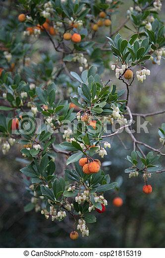 Orange, weißes, beeren, blumen. Nahaufnahme, beeren, orange, busch ...
