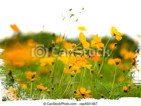 Orange, weisse blumen, freigestellt, wald Bild - Suche Foto Clipart ...