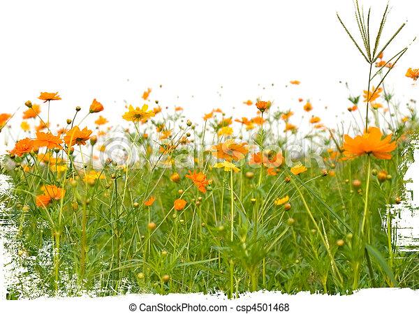 Orange, weisse blumen, freigestellt, wald Bilder - Fotografien und ...
