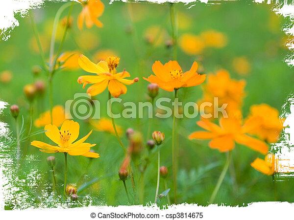 Orange, weisse blumen, freigestellt, wald Stockbilder - Suche ...