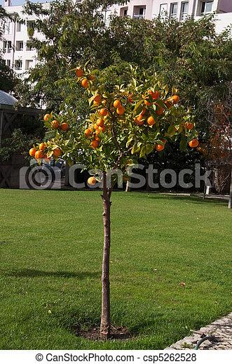 Orangery - csp5262528