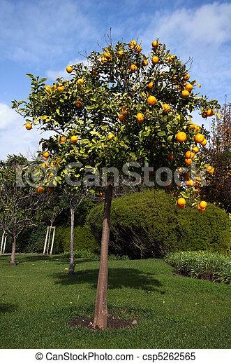 Orangery - csp5262565