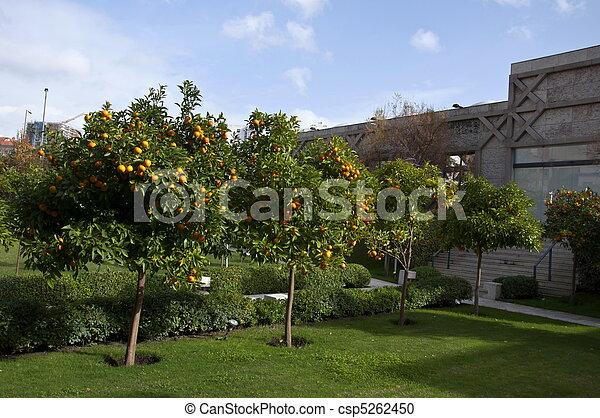 Orangery - csp5262450