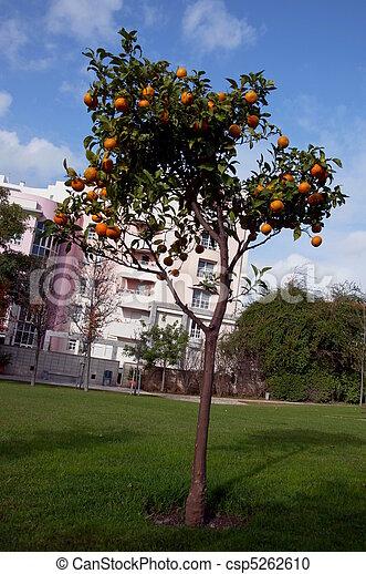 Orangery - csp5262610