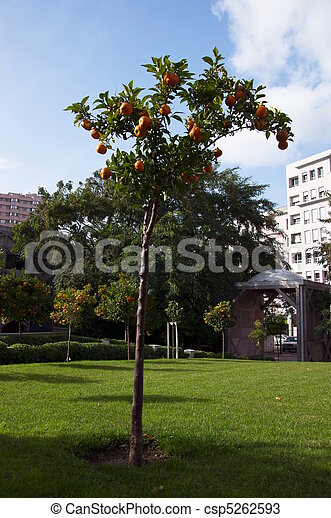 Orangery - csp5262593