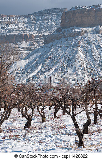 Orchard in Snow - csp11426822