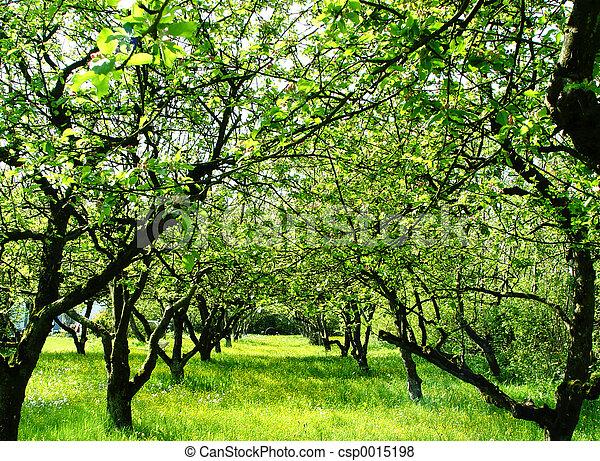 orchard - csp0015198