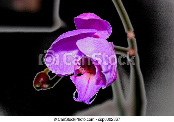 orchidée - csp0002367