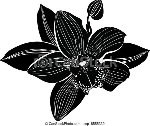 Orchidées Fleurs Isolé Il