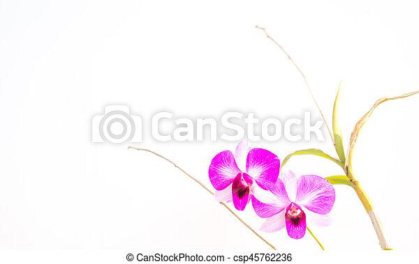 Orquídea. - csp45762236