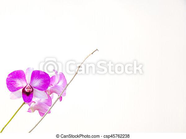 Orquídea. - csp45762238