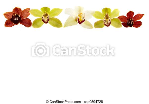 Orchid Border - csp0594728