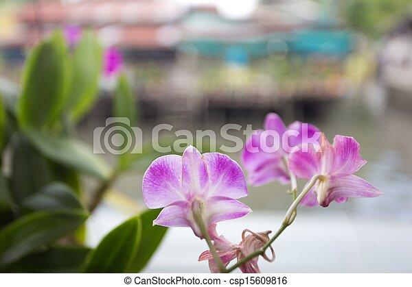 Orchid flower - csp15609816