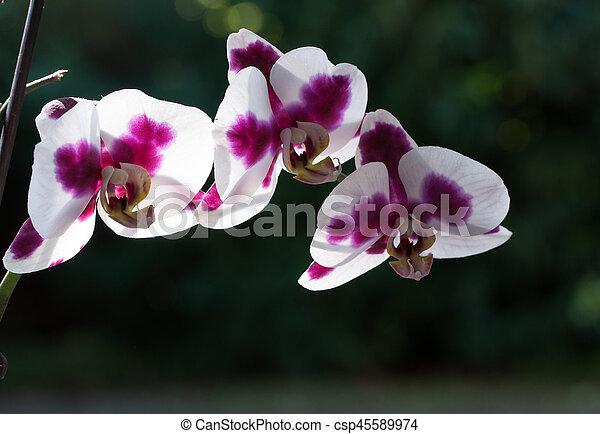 orchid flower - csp45589974