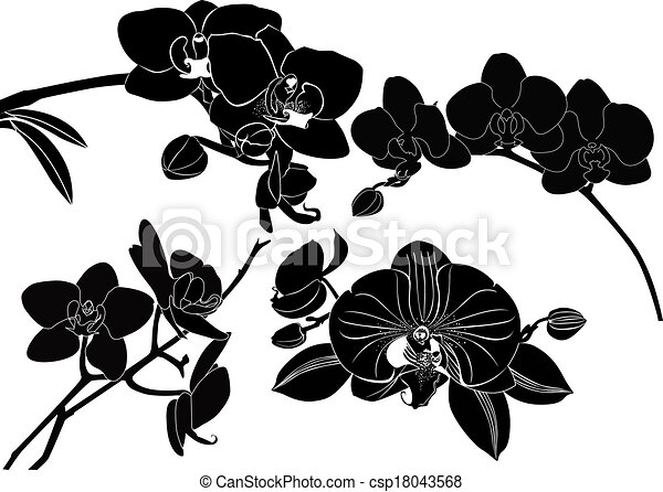 Line Drawing Of Flowers Clipart : Orchid flowers clip art vector search drawings and graphics images