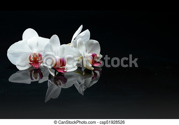 Orchid Flowers On Black Orchid Flowers With Reflections On Black