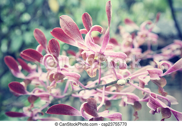 Orchid flowers - csp23755770