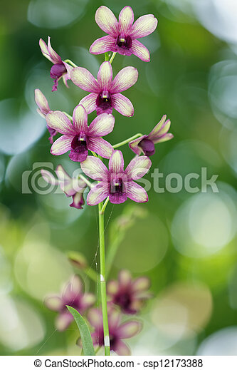 Orchid flowers - csp12173388