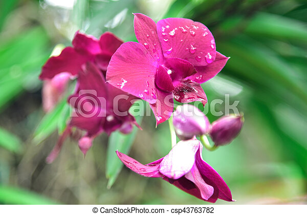 Orchid flowers - csp43763782