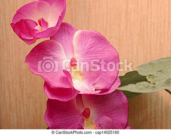 Orchid flowers - csp14025160
