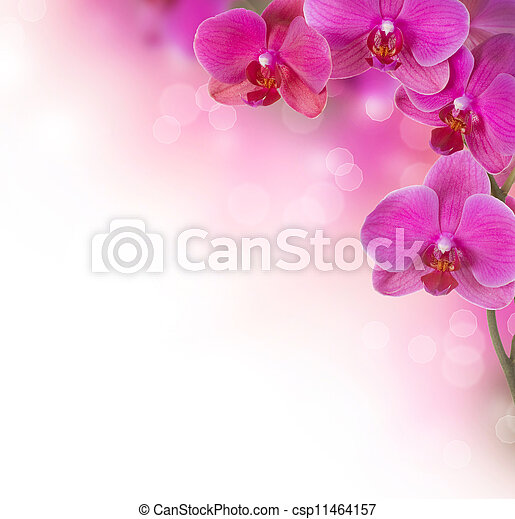 Orchid Flowers - csp11464157