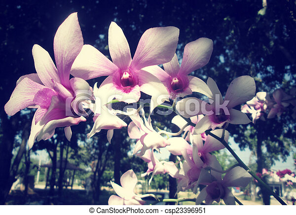 Orchid flowers - csp23396951