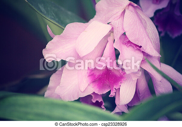 Orchid flowers - csp23328926