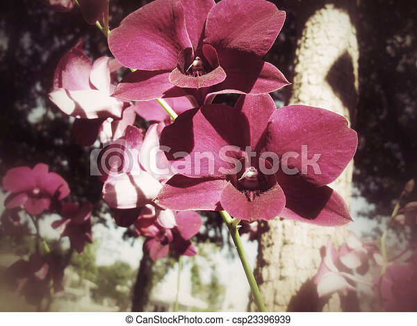 Orchid flowers - csp23396939