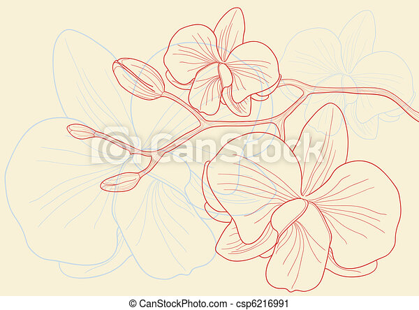 orchid flowers  - csp6216991