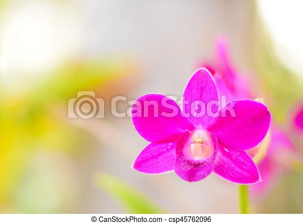 Orquídea. - csp45762096