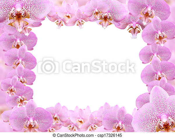 Orchid frame. Picture frame made from lot of pink orchid flowers.
