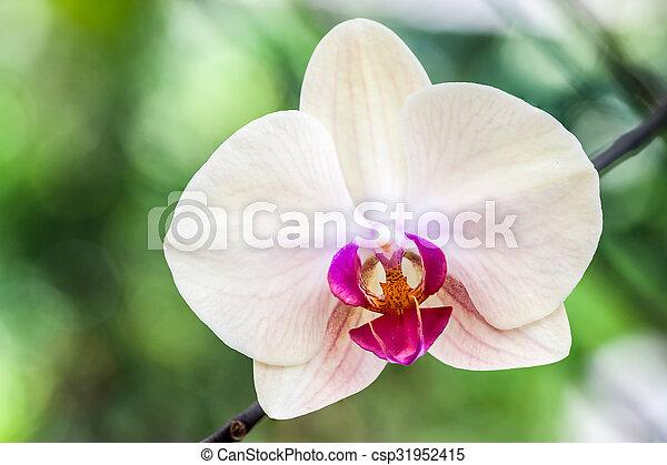 orchid in the garden - csp31952415
