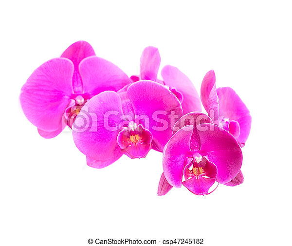 orchid isolated on white background - csp47245182