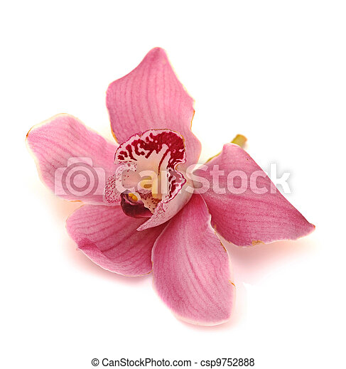 orchid isolated on white background - csp9752888
