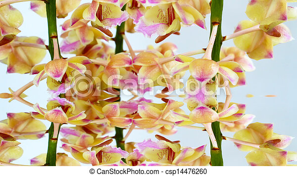 orchid isolated on white background - csp14476260