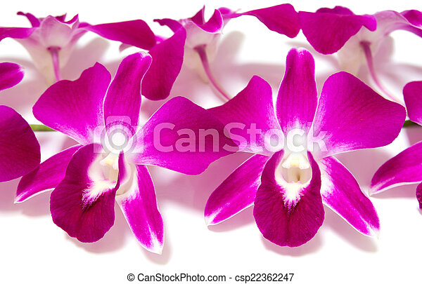 orchid isolated on white background - csp22362247